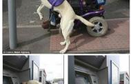 Σκύλος στην υπηρεσία ΑμεΑ